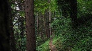 Rupe del monte titano itinerario trekking bosco natura Outdoor escursione